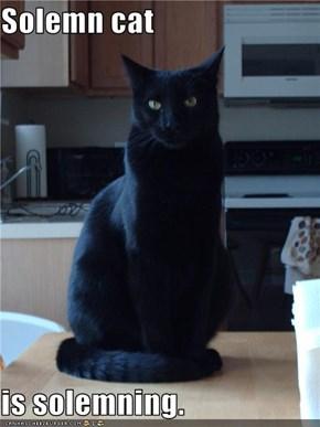 Solemn cat  is solemning.