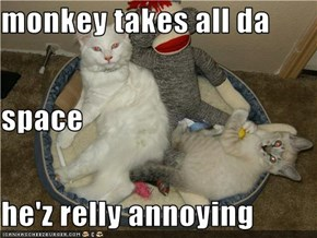 monkey takes all da  space he'z relly annoying