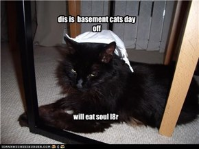 dis is  basement cats day off