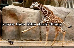 i curse thee little duck thingy
