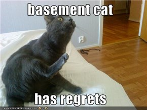 basement cat  has regrets