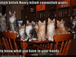 itteh bitteh Hunry kitteh committeh wants  to know what you have in your hands