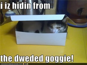 i iz hidin from  the dweded goggie!
