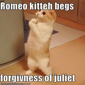 Romeo kitteh begs  forgivness of juliet