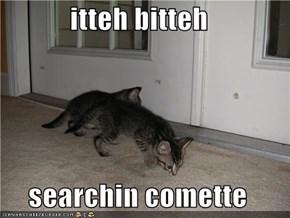 itteh bitteh   searchin comette