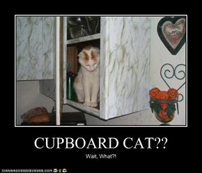 CUPBOARD CAT??