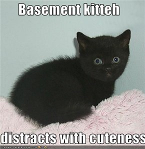 Basement kitteh  distracts with cuteness