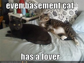 even basement cat  has a lover