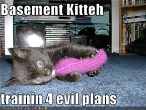Basement Kitteh  trainin 4 evil plans