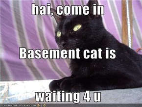 hai, come in Basement cat is waiting 4 u