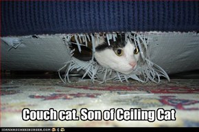 Couch cat. Son of Ceiling Cat
