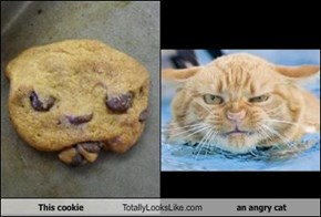 This cookie Totally Looks Like an angry cat