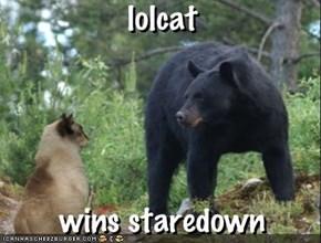 lolcat - wins staredown
