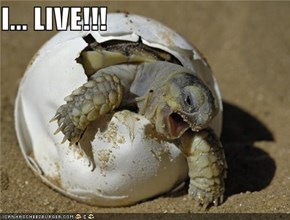 I... LIVE!!!