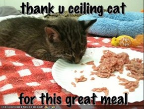 thank u ceiling cat - for this great meal