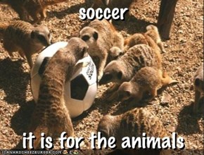 soccer - it is for the animals