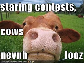 staring contests, cows nevuh                  looz