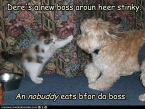 Dere's a new boss aroun heer stinky.