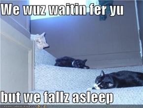 We wuz waitin fer yu  but we fallz asleep