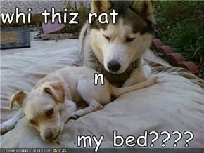 whi thiz rat  n my bed????