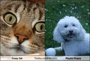 Crazy Cat Totally Looks Like Playful Puppy