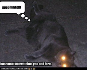 basement cat watches you and farts