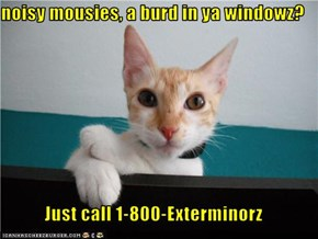 noisy mousies, a burd in ya windowz?  Just call 1-800-Exterminorz