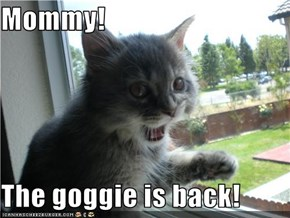 Mommy!  The goggie is back!