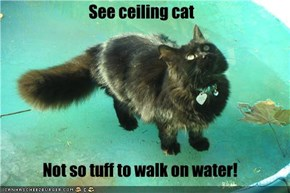 See ceiling cat  Not so tuff to walk on water!