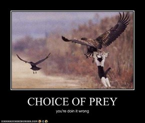 CHOICE OF PREY
