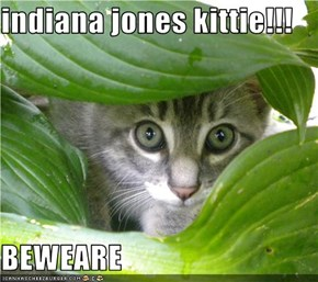 indiana jones kittie!!!  BEWEARE