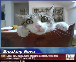 Breaking News - Local cat, Rudy, wins starring contest. wins free cheezburger!!! news @ 11