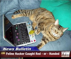 News Bulletin - Feline Hacker Caught Red - er - Handed
