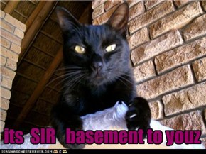 its  SIR   basement to youz