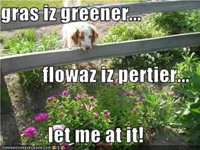 gras iz greener... flowaz iz pertier... let me at it!