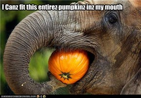I Canz fit this entirez pumpkinz inz my mouth