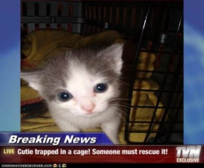 Breaking News - Cutie trapped in a cage! Someone must rescue it!