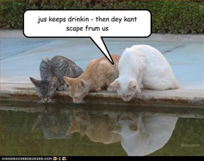 jus keeps drinkin - then dey kant  scape frum us