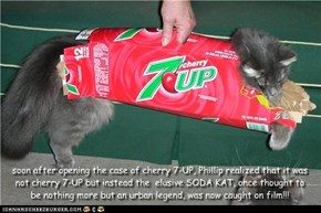 soon after opening the case of cherry 7-UP, Phillip realized that it was not cherry 7-UP but instead the  elusive SODA KAT, once thought to be nothing more but an urban legend, was now caught on film!!!
