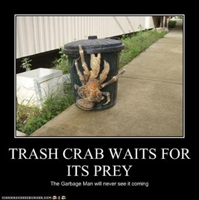 TRASH CRAB WAITS FOR ITS PREY