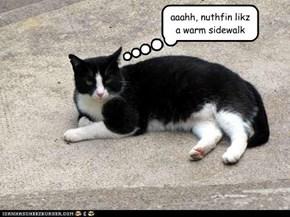 aaahh, nuthfin likz a warm sidewalk