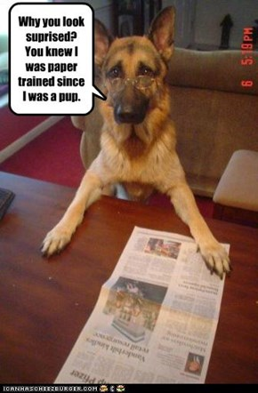 Why you look suprised? You knew I was paper trained since I was a pup.