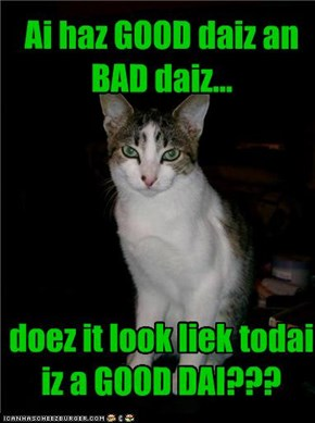 Ai haz GOOD daiz an BAD daiz...      doez it look liek todai iz a GOOD DAI???