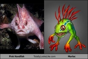 Pink Handfish Totally Looks Like Murloc