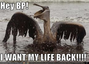 Hey BP!  I WANT MY LIFE BACK!!!!