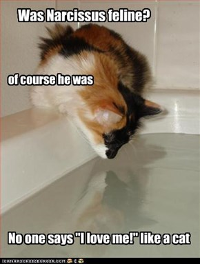 Was Narcissus feline?