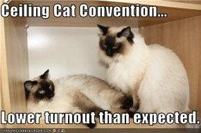 Ceiling Cat Convention...  Lower turnout than expected.