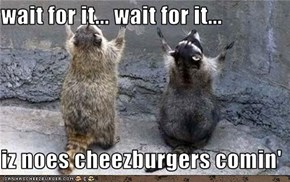 wait for it... wait for it...  iz noes cheezburgers comin'