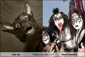 this cat Totally Looks Like Gene Simmons
