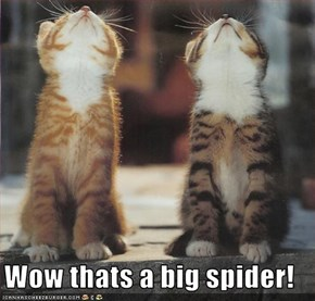 Wow thats a big spider!